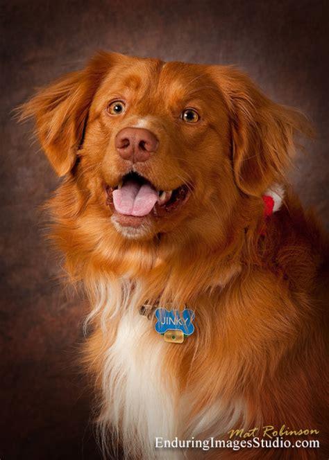 enduring images photography studio dog portrait studio
