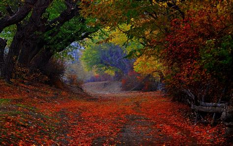 nature landscape colorful path trees fence leaves fall tunnel shrubs wallpapers hd