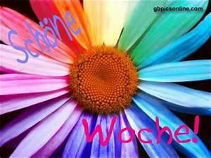 Schöne Bilder Facebook : sch ne woche 5689 gb pics gb bilder g stebuchbilder facebook bilder google bilder jappy ~ Orissabook.com Haus und Dekorationen