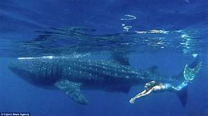 Real life mermaid swims with sharks using her own £10,000 ...