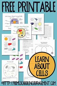 Plant And Animal Cell Printables Grades 4