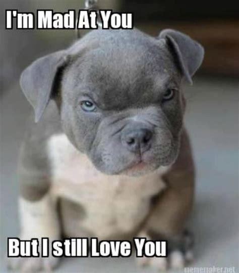 Mad At You Meme - 20 outrageously funny i love you memes sayingimages com