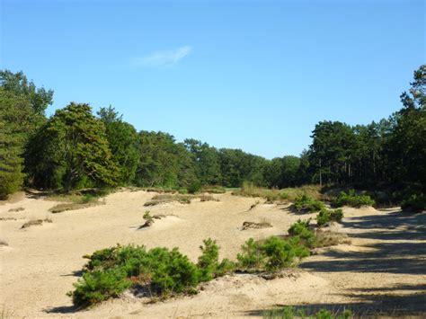 Pine Valley Nj Location
