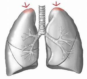 Respiratory Tract And Heart