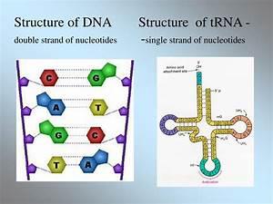 Ppt - Organic Molecules