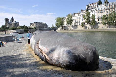 meteo parigi web un capodoglio spiaggiato in centro a parigi gallery