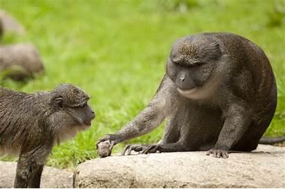 Monkey Swamp Allen Zoo Allens Tags Oregon