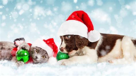 wallpaper christmas  year snow puppy kitten cute