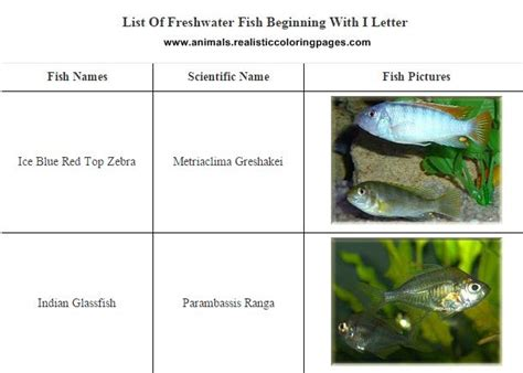 fish starting with a list of freshwater fish beginning with i animals name a to z