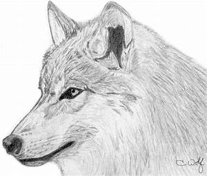 .Wolf - Side Profile. by White-Wolfen on DeviantArt