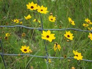 Florida Wildflowers Identification