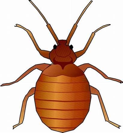 Clipart Animated Bug Bugs Bed Bedbug Clip