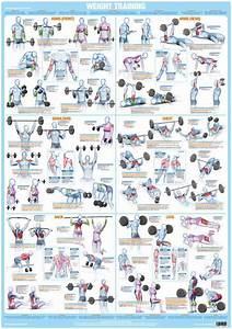 Whole Body Workout Weight Training Exercise Chart  U2013 Chartex Ltd