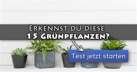 ᐅ Erkennst Du Diese 15 Grünpflanzen?