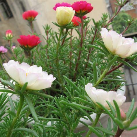 green garden nursery flower plants