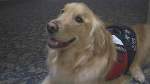 Therapy dog named Buddy comforts guests at Rhode Island ...