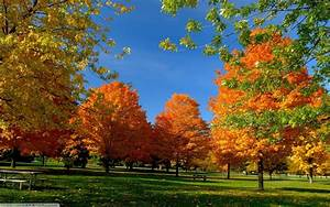 Fall, Landscape, Trees, Wallpapers, Hd, Desktop, And, Mobile