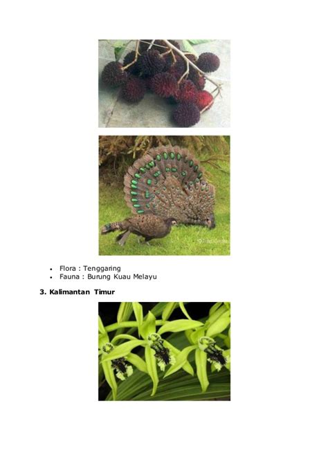 wilayah flora dan fauna barat tipe asiatis