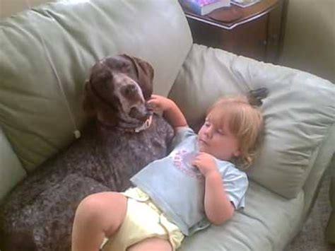 german shorthaired pointer baby   nap youtube