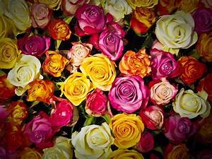Blumen Online Bestellen Und Verschicken