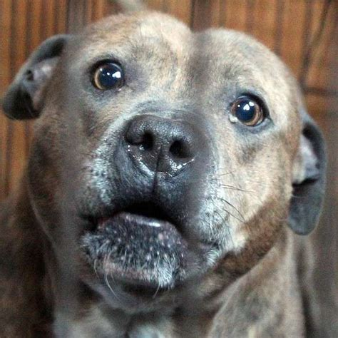 charities concerned  dog laws uk news expresscouk