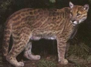 14 Real And Incredible Animal Hybrids Around The World