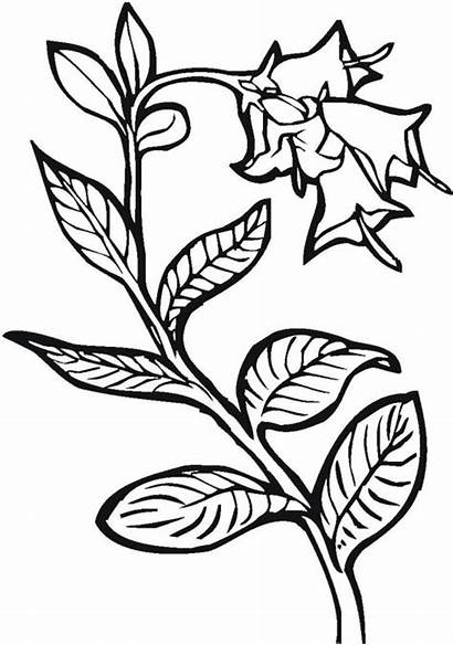 Coloring Plants Growing Pages Template Plant Seed