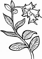 Coloring Plants Growing Template Pages Templates sketch template