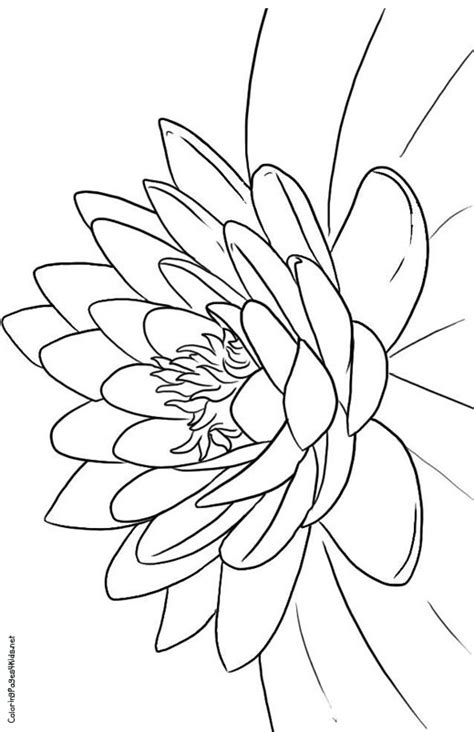 Paper-like lotus. | Flower coloring pages, Flower coloring sheets, Pattern coloring pages