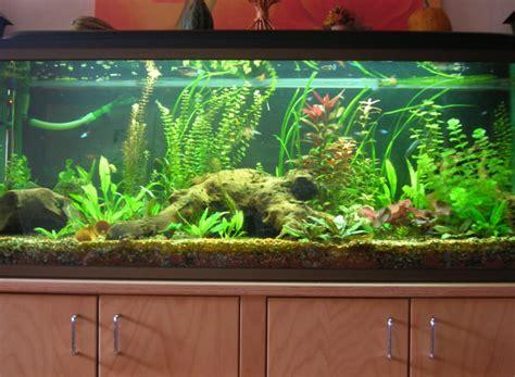 500 liter gesellschaftsbecken aquarium forum