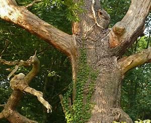Grenzabstand Bäume Nrw : alte b ume in lippe nrw owl teutoburgerwald uralt bizarr ~ Frokenaadalensverden.com Haus und Dekorationen