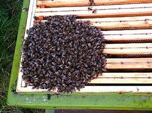 Wie überwintern Bienen : s dtirols bienen irritiert warmer winter tirol ~ A.2002-acura-tl-radio.info Haus und Dekorationen