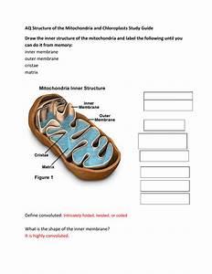 30 Draw And Label Mitochondria