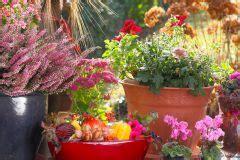 Balkonpflanzen Gegen Mücken by Balkonpflanzen Im K 252 Bel 187 Winterharte Topfpflanzen