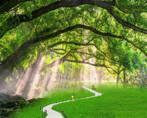 3d Wallpapers Trees by Beibehang 3d Wallpaper Tree Landscape Photo