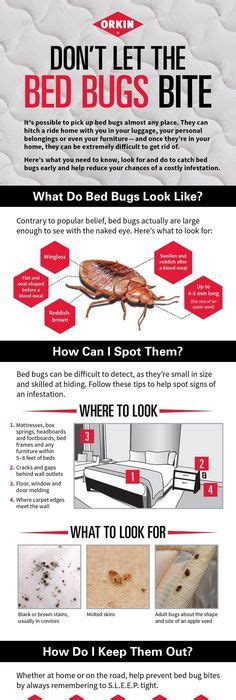 how to get rid of bugs in kitchen cabinets pictures and treatment of any bed bugs bite see our guide 9905