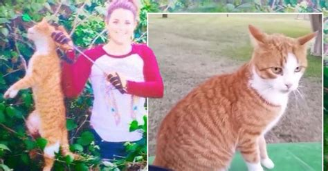 outrage  vet  bow  arrow  kill feral cat    neighbours beloved