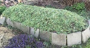 Rasenschnitt Liegen Lassen : pflanzenmasse ~ Lizthompson.info Haus und Dekorationen