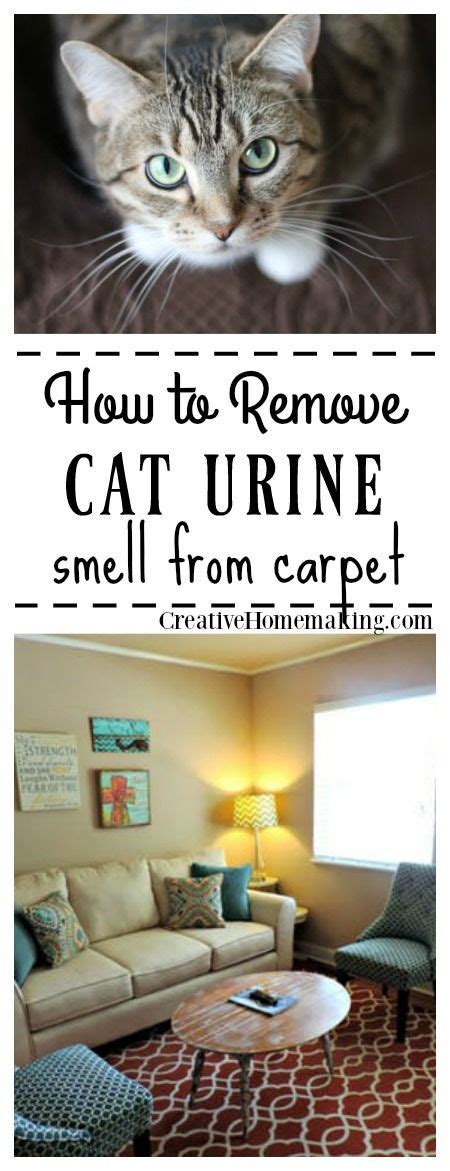 Remove Cat Urine Smell From by 2347 Best Creative Homemaking Images On Health