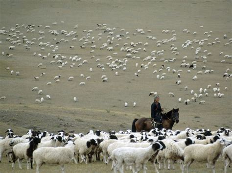 herding national geographic society