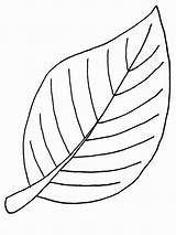 Coloring Autumn Leaf Beech sketch template