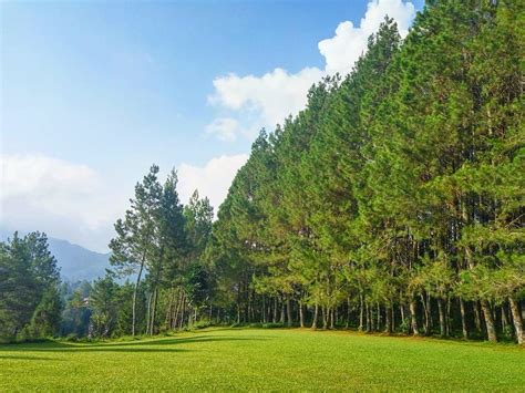 mengintip romantisnya pine hill cibodas venue wedding