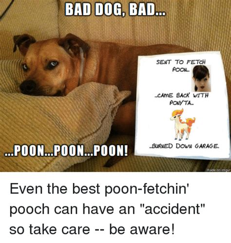 Bad Dog Meme - bad dog bad sent to fetch poon came back vith ponyta burned down garage poon poonpoon ade on