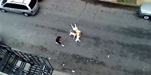 BRONX: Woman Charged After Pit Bull Attack [VIDEO] - Joe ...