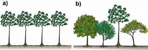 Schematic Profile Diagram Of Trees Growing In   A