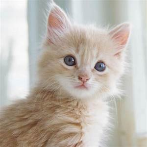 Cute Cats #7 | ... Cute Cats