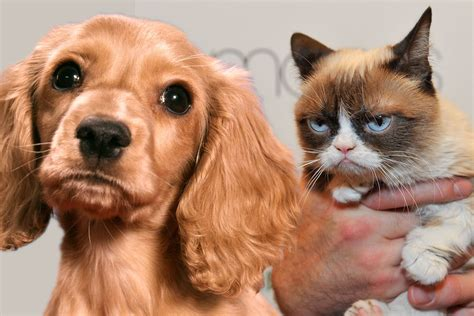 Why Do Dogs And Cats Hate Each Other? Why Do They Not Get