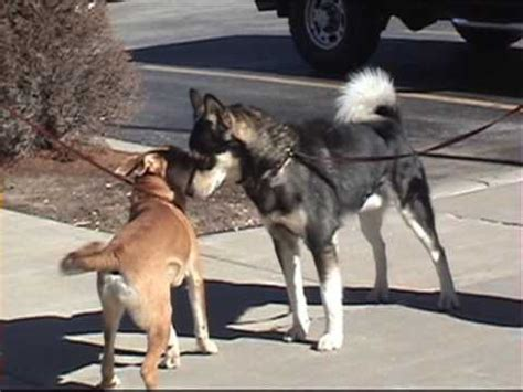 great snark slow motion dog  dog meeting youtube