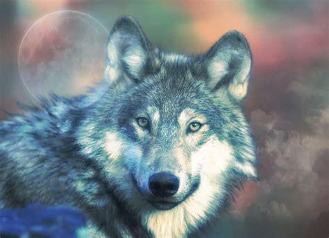 Spirit Animal ⋆ Lonerwolf