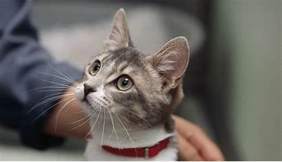 Animal Animals Cat Research Understanding Catus Felis